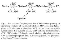 Neuroprotective Properties of Citicoline